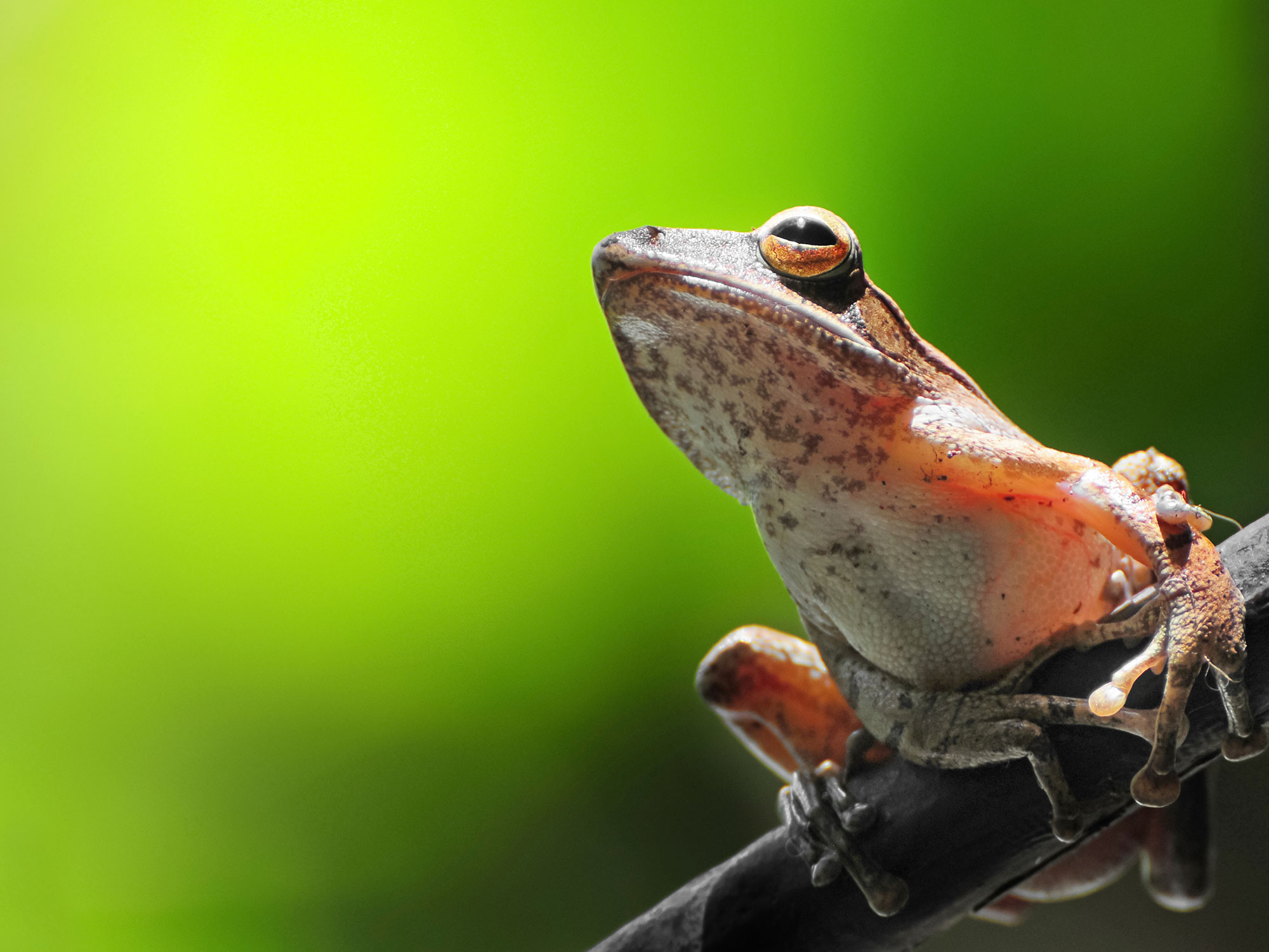 Screaming Frog Guide to Doing Almost Anything