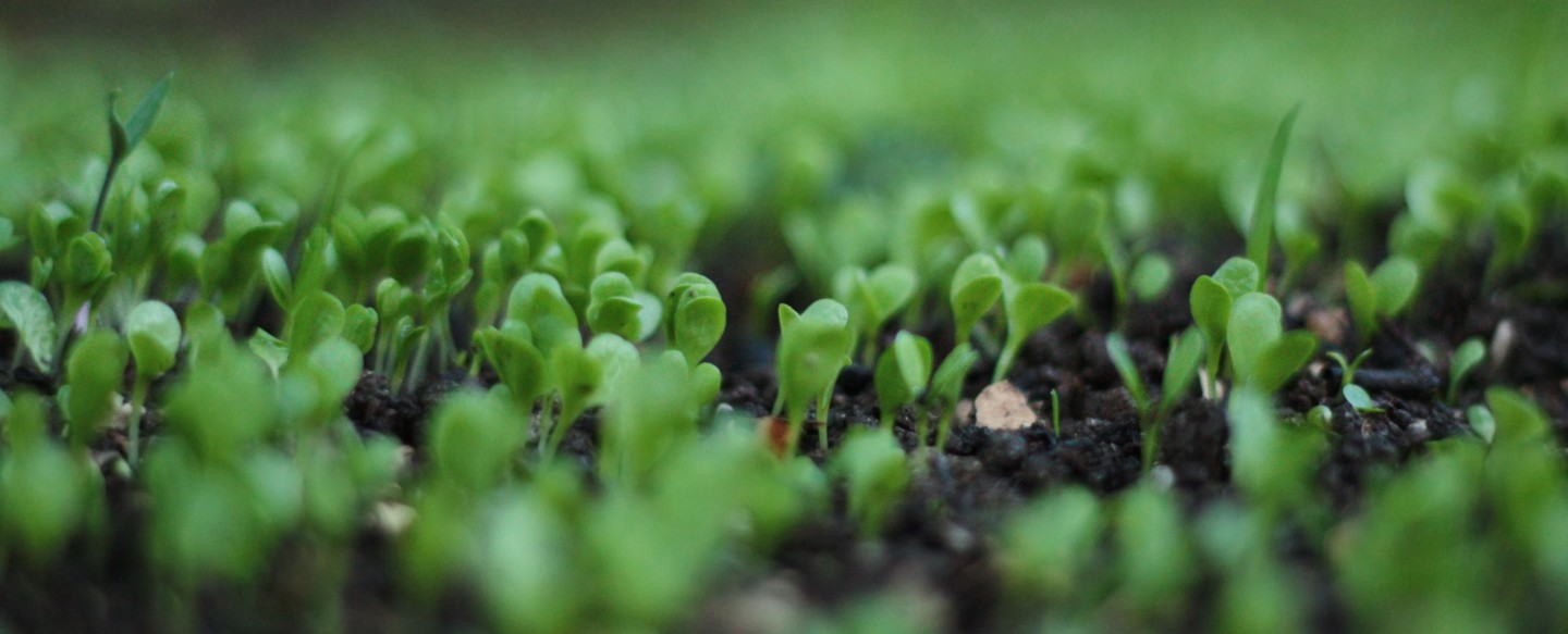 agriculture-close-up-depth-of-field-767240