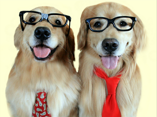 Puppies in Glasses