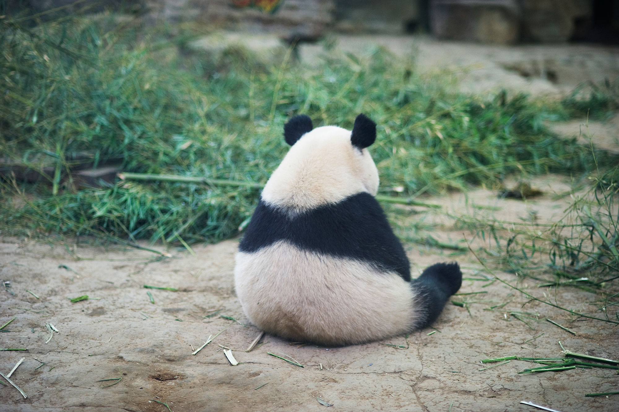 Is Google's Panda Algorithm Creating An Endangered Species ...